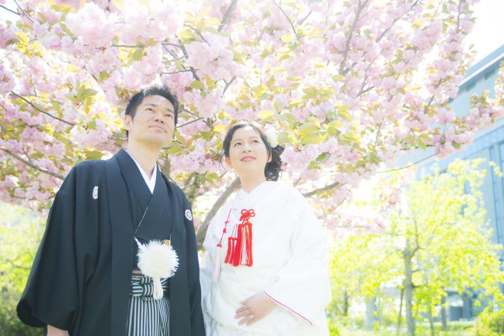 桜の満開予想🌸