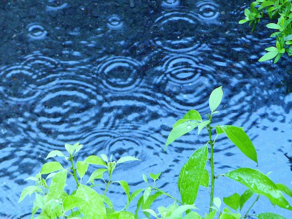 来月から梅雨の時期です☔